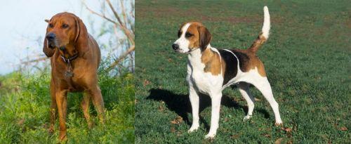 Redbone Coonhound vs English Foxhound