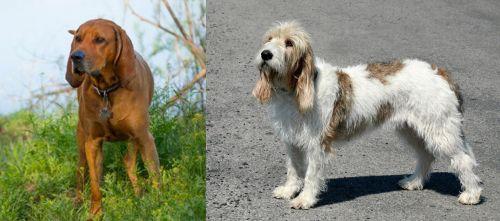 Redbone Coonhound vs Grand Basset Griffon Vendeen