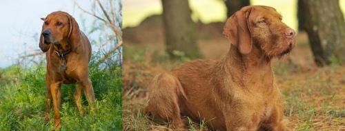 Redbone Coonhound vs Hungarian Wirehaired Vizsla