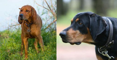 Redbone Coonhound vs Lithuanian Hound