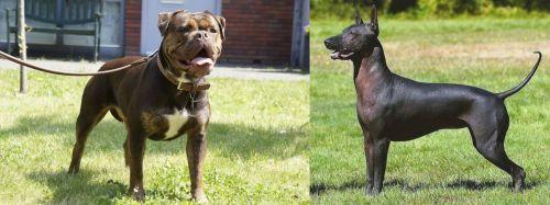 Renascence Bulldogge vs Hairless Khala