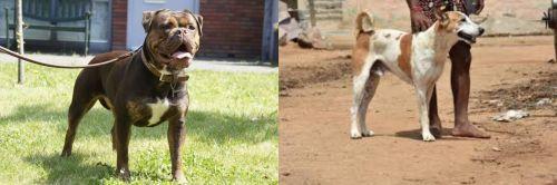 Renascence Bulldogge vs Pandikona