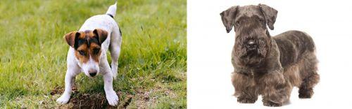 Russell Terrier vs Cesky Terrier