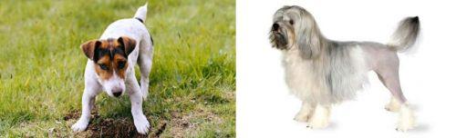 Russell Terrier vs Lowchen