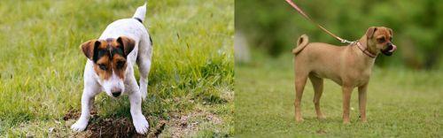 Russell Terrier vs Muggin