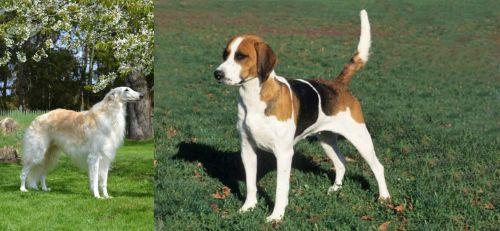 Russian Hound vs English Foxhound
