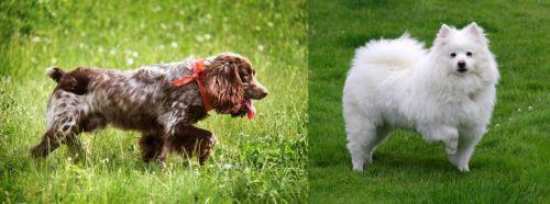 Russian Spaniel vs American Eskimo Dog