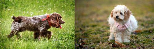 Russian Spaniel vs West Highland White Terrier