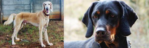 Saluki vs Polish Hunting Dog