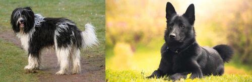 Schapendoes vs Black Norwegian Elkhound