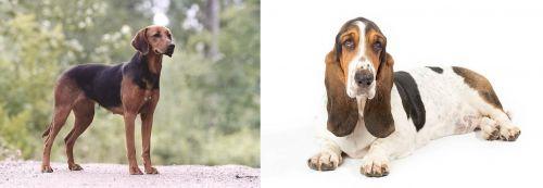 Schillerstovare vs Basset Hound