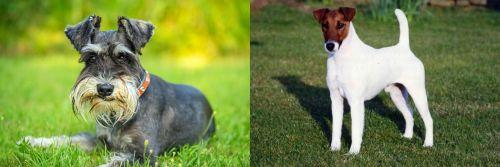 Schnauzer vs Fox Terrier (Smooth)