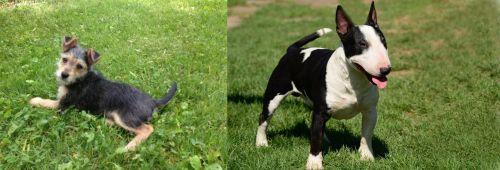 Schnorkie vs Bull Terrier Miniature
