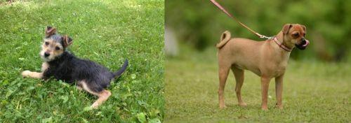 Schnorkie vs Muggin