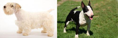 Sealyham Terrier vs Bull Terrier Miniature
