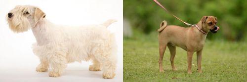 Sealyham Terrier vs Muggin