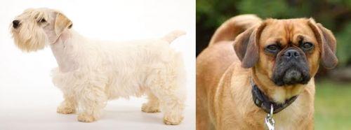 Sealyham Terrier vs Pugalier