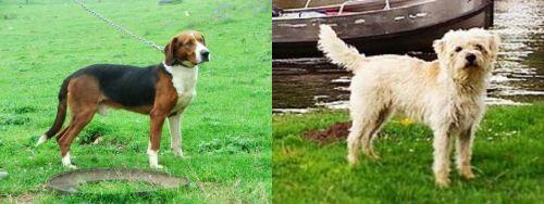 Serbian Tricolour Hound vs Dutch Smoushond