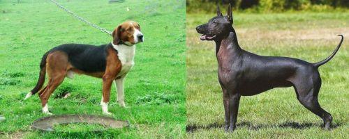 Serbian Tricolour Hound vs Hairless Khala