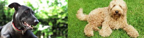 Shepard Labrador vs Labradoodle