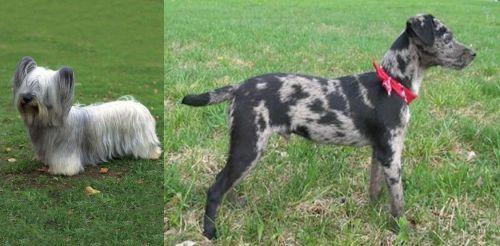 Skye Terrier vs Atlas Terrier