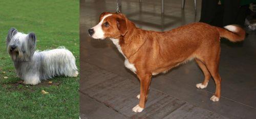 Skye Terrier vs Austrian Pinscher