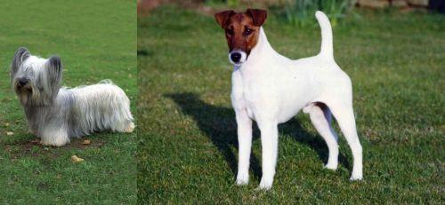 Skye Terrier vs Fox Terrier (Smooth)