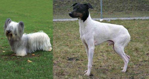 Skye Terrier vs Japanese Terrier