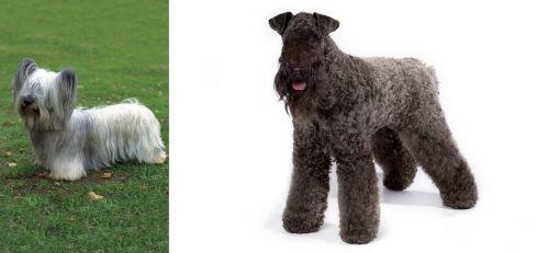 Skye Terrier vs Kerry Blue Terrier