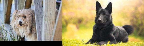 Smithfield vs Black Norwegian Elkhound