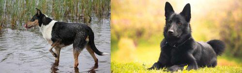 Smooth Collie vs Black Norwegian Elkhound