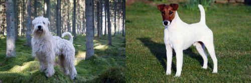 Soft-Coated Wheaten Terrier vs Fox Terrier (Smooth)