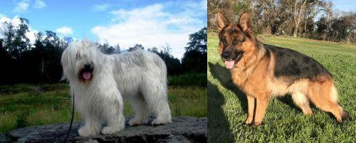 South Russian Ovcharka vs German Shepherd
