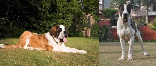 St. Bernard vs Alangu Mastiff