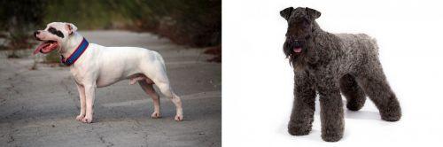Staffordshire Bull Terrier vs Kerry Blue Terrier