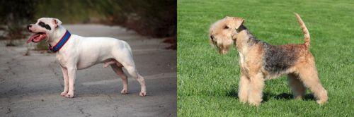 Staffordshire Bull Terrier vs Lakeland Terrier