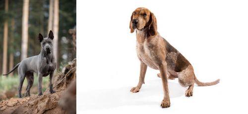 Thai Ridgeback vs Coonhound