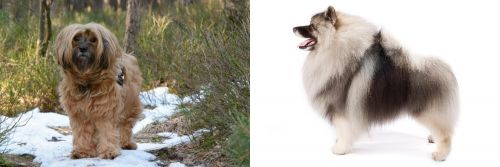 Tibetan Terrier vs Keeshond
