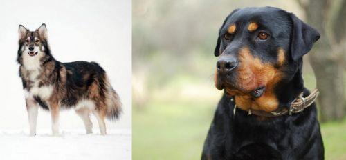 Utonagan vs Rottweiler