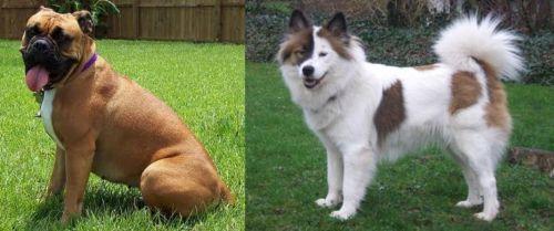 Valley Bulldog vs Elo