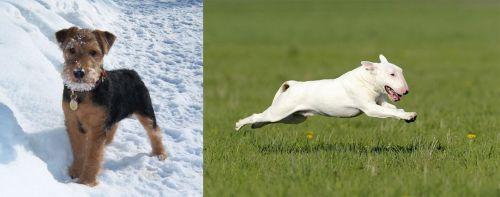 Welsh Terrier vs Bull Terrier