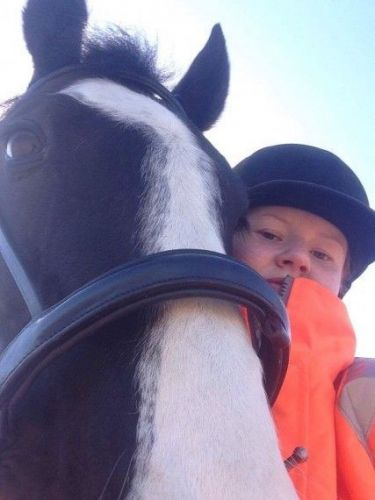 American Quarter Horse Horses for sale in Escondido, CA, USA. price 800USD
