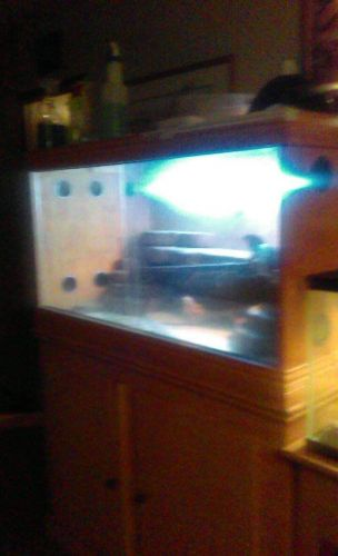 Bearded Dragon Reptiles for sale in Sterling Heights, MI, USA. price 250USD