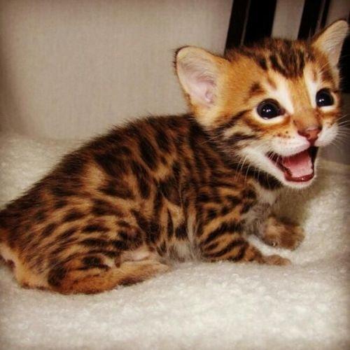 hyperthyroid medicine for cats