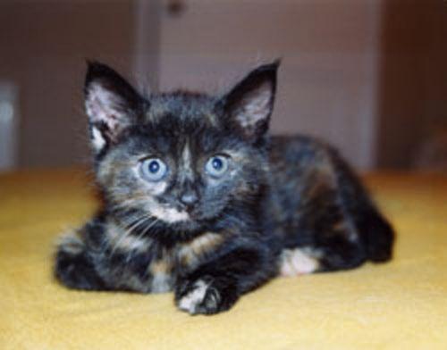 bristol kitten