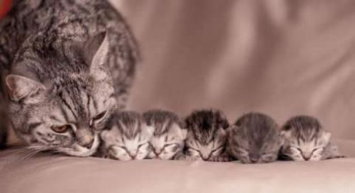 bristol kittens