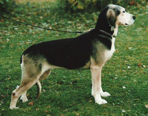 dunker dog