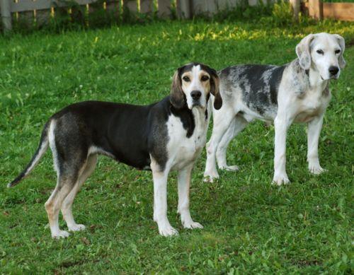 dunker dogs