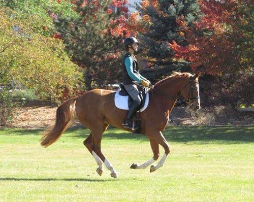 Dutch Warmblood Horses for sale in Atlanta, GA, USA. price 2000USD