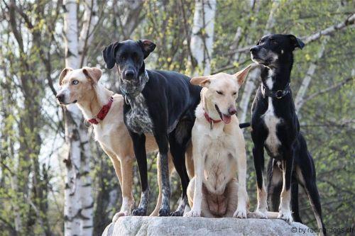 eurohound dogs